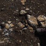 Deponie Trossingen- schöne Ammoniten- die meisten leider als Bruchstücke