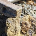 Tongrube Geisingen- weitgehend ausgebeutet, dennoch einige schöne Stücke gefunden